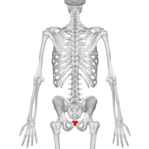 Feature-image-Oh-Coccyx-My-Coccyx-300x300@2x